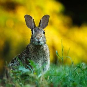 Plants Resistant to Rabbits