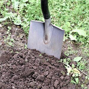 Clay Soil Tolerant Plants